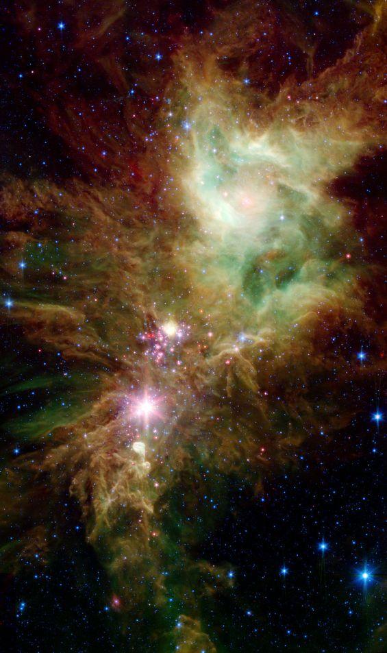 800px-NGC_2264