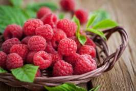 raspberries-727x485
